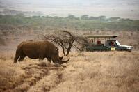 Lewa-Privatreservat in Kenia unter UNESCO-Welterbeschutz