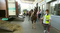 Trailer RTL Reportage: Als die Tiere fliegen lernten - Hochsaison am Airport