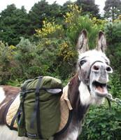 Schöne Eselei: Wandern mit einem verkannten Gefährten