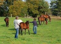 Horsemanship Kommunikationstraining