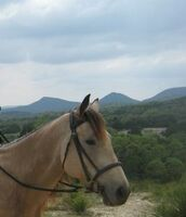 Mit-Pferden-reisen.de Reisebericht: Westernreiten Lernen im texanischen Hill Country