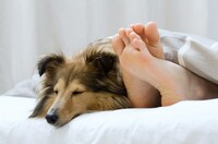 Erstklassige, orthopädische Hundekörbe mit Kunstlederbezügen