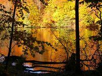 """""""Herbstspecial"""" im Parkhotel Rügen - Auf Deutschlands größter Insel entspannt in die goldene Jahreszeit starten"""