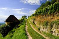 Markgräfler Wiiwegli - Wandern durch die schönste Weinlandschaft Europas