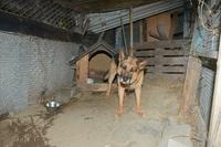 Deutsches Tierschutzbüro hilft Kettenhund