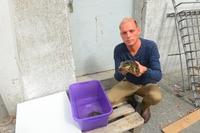 Deutsches Tierschutzbüro warnt: Tiere sind keine Ramschware