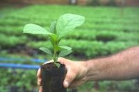 Life Forestry setzt auf Nachhaltigkeit und hohe Rendite