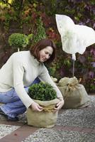 Kübelpflanzen winterfest machen