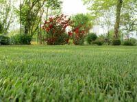 Gartenpflege-Tipps vom Rasenprofi Schwab