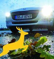 ADAC-Fahrtraining wappnet Autofahrer gegen Wildunfälle