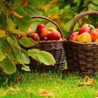 Zuegg präsentiert herbstliches Bratapfelrezept