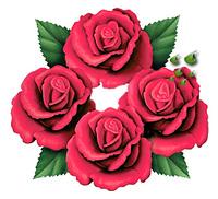 Four Roses Single Barrel - ein Whisky mit romantischer Geschichte