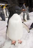 SeaWorld & Busch Gardens Conservation Fund unterstützt 93 Wildtier-Projekte