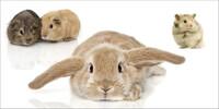 markt.de veröffentlicht Ranking zu beliebtesten Haustieren aus dem Kleintierbereich - Kaninchen ist Lieblingstier