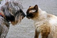 Wenn die Nase läuft und die Augen tränen - Erkältungen bei Hund und Katze