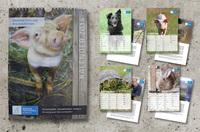 Deutsches Tierschutzbüro: Tierretter Kalender 2014 ist da!