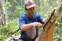 Kräuter und Gewürze mit Rainforest Alliance Certified-Siegel auf dem Vormarsch