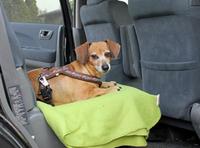 Autofahren mit Hund: Vierbeiner auf Touren richtig vorbereiten