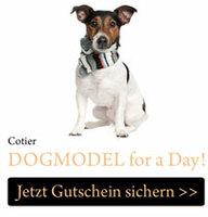 Weihnachtsgeschenk: Katzen und Hunde Fotoshooting
