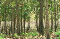Life Forestry lehnt Emissionshandel ab