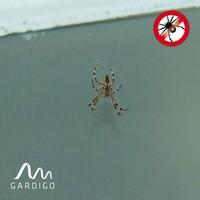 Tipps gegen Spinnen im Haus: Spinnenbefall vorbeugen mit Gardigo