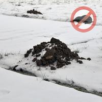 Maulwürfe im Garten vertreiben: So Schützen Sie sich im Winter!
