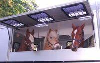 Qualität und Langlebigkeit bei Pferdeanhängern Trumpf