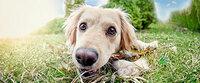 Die beliebtesten Hundenamen 2013: Snoopy und Pixel