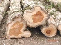 Mit Holzinvestments zur hohen Rendite