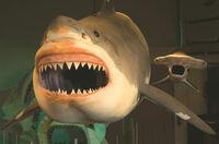 Urzeitlicher Riesenhai kommt nach Rockford