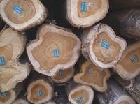 Life Forestry setzt auf Anlegersicherheit