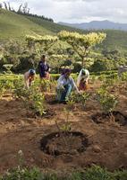 UTZ-zertifizierte Farmen liefern höhere Erträge und bessere Ernten