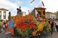 Zum Blumenfest nach Madeira reisen: Frühling auf der Blumeninsel
