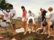 Academical Travels bietet neue Freiwilligendienste in Vietnam, Südafrika, Namibia, Argentinien und auf den Philippinen