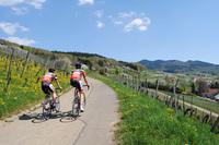 Badenweiler will Hochburg des Radtourismus werden
