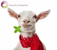 University of Happiness - Die erste deutsche Universität, die uns das Glücklichsein lehrt
