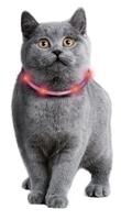 Neuheit: Visio Light Cat von Karlie Flamingo - das weltweit erste LED-Leuchthalsband für Katzen