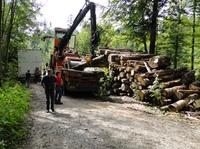 Collaboration Plattform IFIS Uno der Schweizer Holz- und Forstwirtschaft erhält neue Infrastruktur