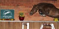 3. Springpferde-Auktion am 29. April 2014 auf dem Rahmannshof in Essen