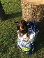 Fachakademie für Hundetrainer spendet vier Tonnen Hundefutter