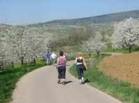 Das Markgräflerland im Frühjahr: Wandern, Wein und Blüten