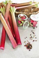 Drei Gänge - ein Gemüse: Die vielen Seiten des Rhabarbers