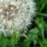 """Homöopathie bei Allergien: """"Der ganze Mensch"""""""