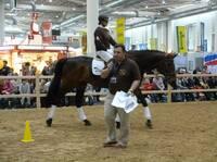 Reitsport: Andreas Werft und Markus Koeppel kooperieren in der pferdegerechten Ausbildung