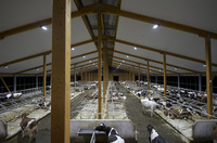 Milchviehstall mit hochwertigen LED-Leuchten ausgestattet