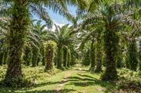 Palmöl-Check 2013