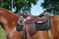 Produkttest und Tipp auf Mit-Pferden-reisen.de: Quittpad