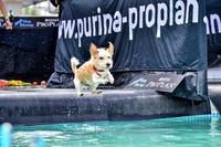 Cooler Sport für heiße Tage: Dog Diving erobert Deutschland