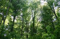 HKI: Brennstoff Holz - Schutz der deutschen Wälder gesichert