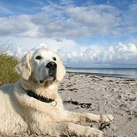 Dänemark ändert Hundegesetz